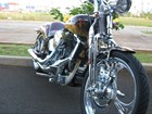 Used 2000 Harley-Davidson® Springer® Softail